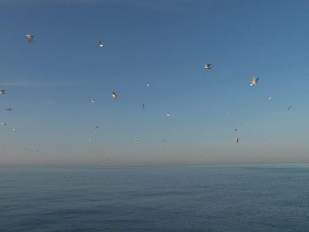 Závod plachetnic ve vodách Černého moře města Soči