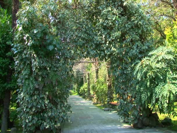 Exotic plants parks and gardens