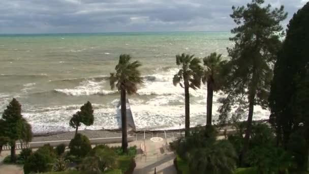 Hurikán větrné, nabízející listy Palmy po přímořské promenádě během bouře