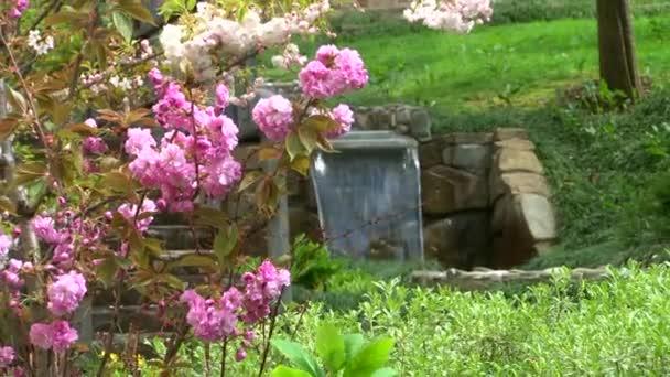 Japonská třešeň kvetoucí keříky v arboretu