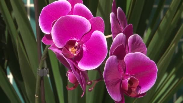 Flowers blooming orchids