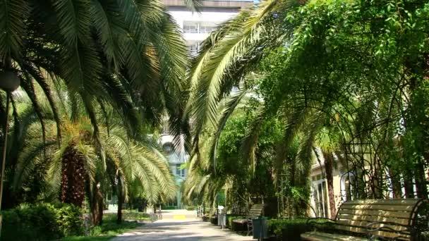 Typy rovněž Dendrologická park Soči a kvetoucí rostliny