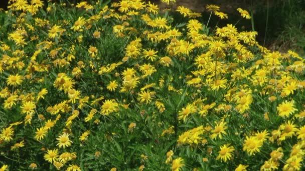 Rostliny subtropického černomořského města Soči