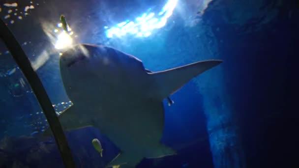 Podvodní obyvatelé akvária