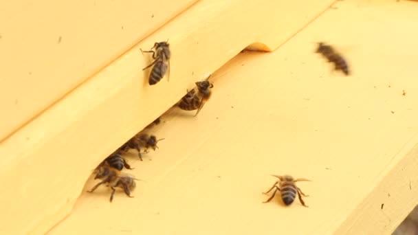 včely letí do úlu