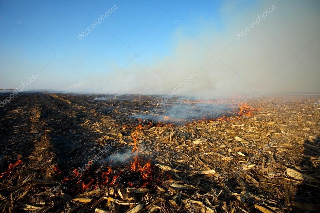 fire in dry field corn