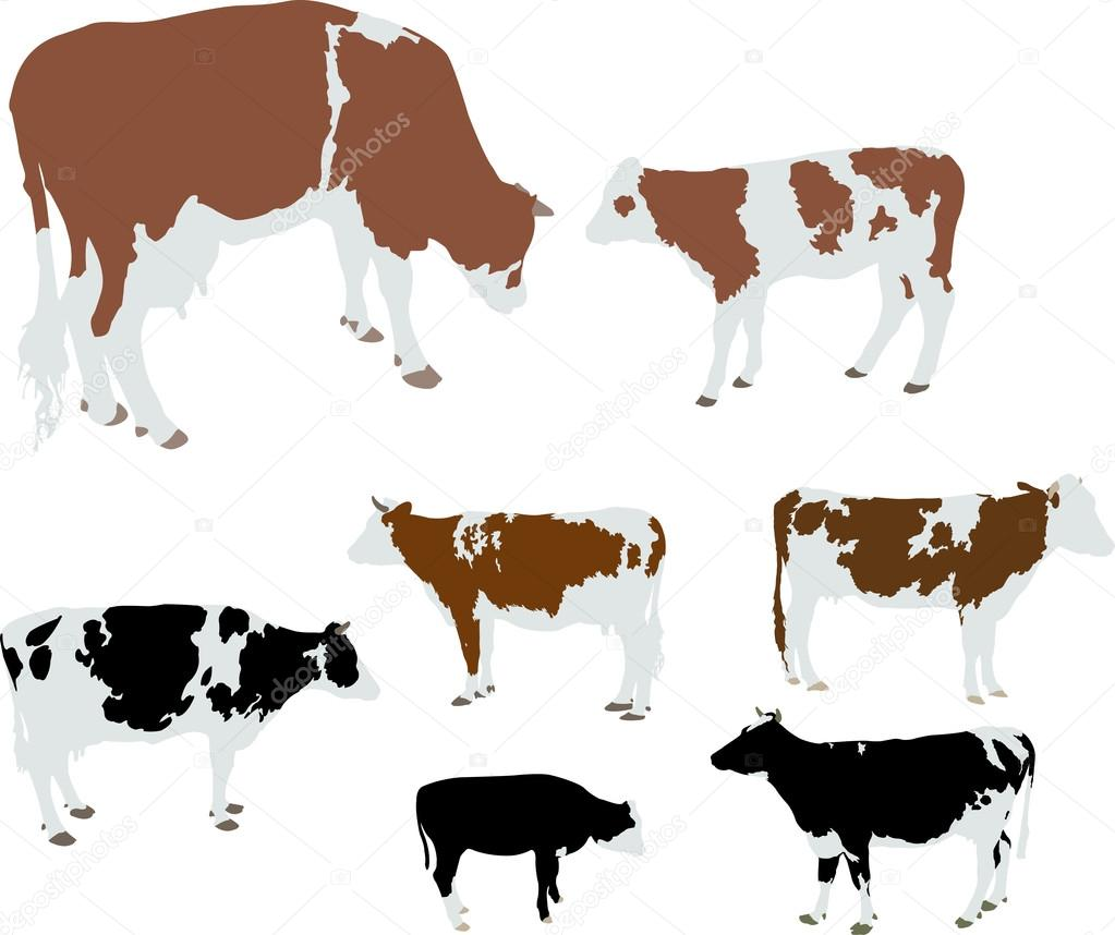 Cows And Calf Color Vector Silhouette Stock Vector Daraanja Cow Color