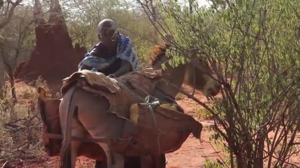 Maasai lady using a donkey to carry water, Taveta, Kenya, March 2013