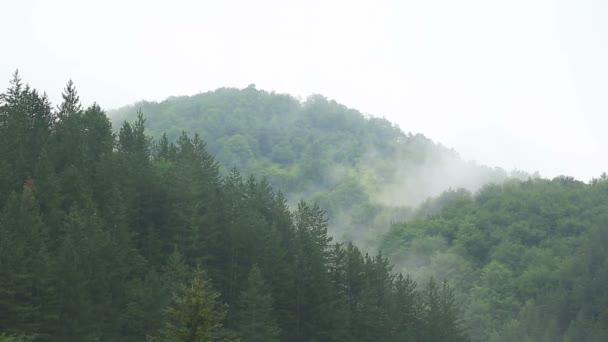 Ködös erdő - Időközű - Full Hd