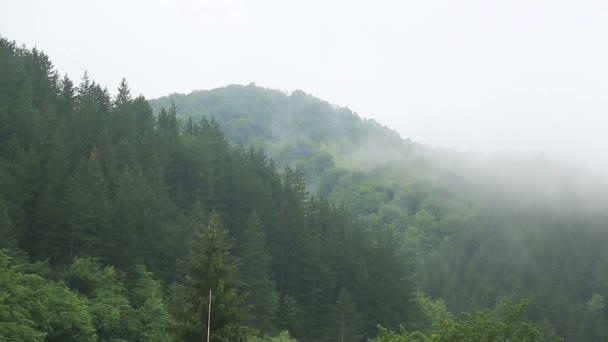 Nebelwald - Zeitraffer - voller HD