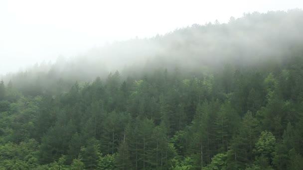 Zamlžené lesních - časová prodleva - Full Hd