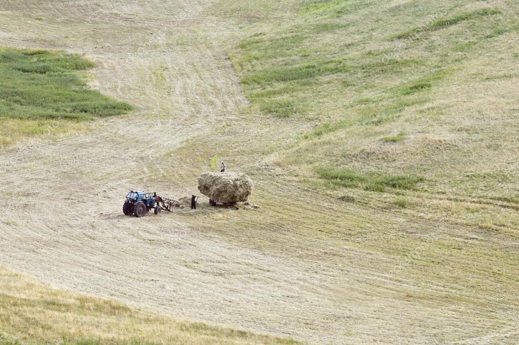 Haymaking. Loading mown hay