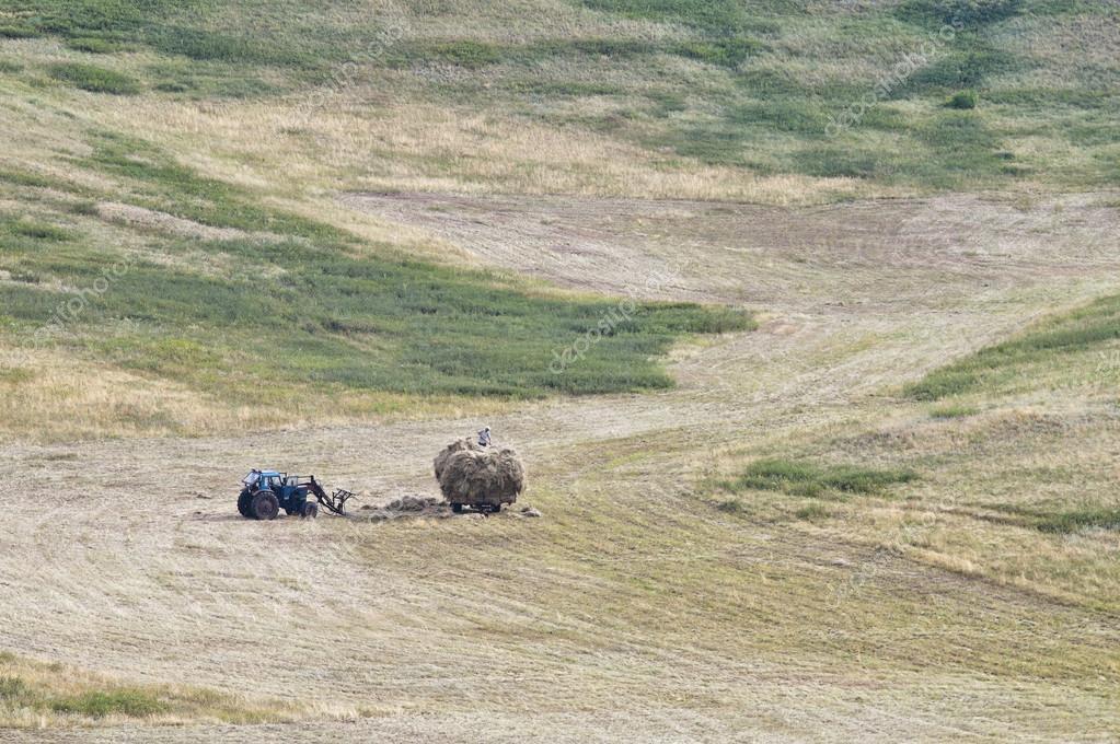 Loading mown hay on a hillside