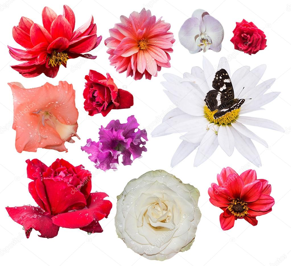 Isolated flowers on white background