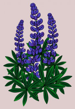 Inflorescence of lupines. Vector