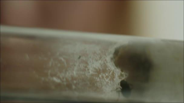 Žena vědec studuje mravence