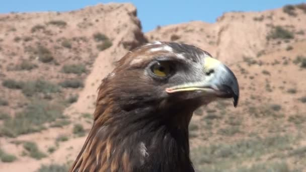 eagle in the arid mountain landscapes