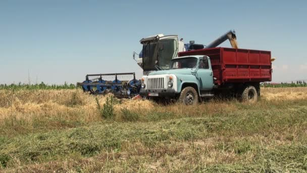 truck receives wheat from a combine harvester