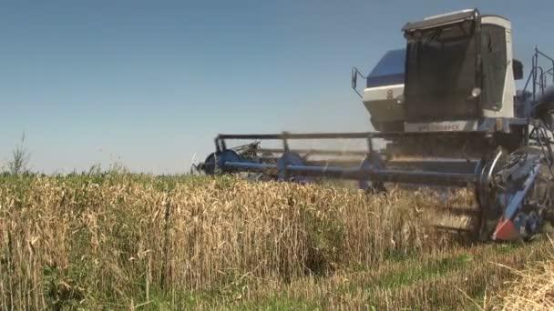 combine harvester cuts wheat