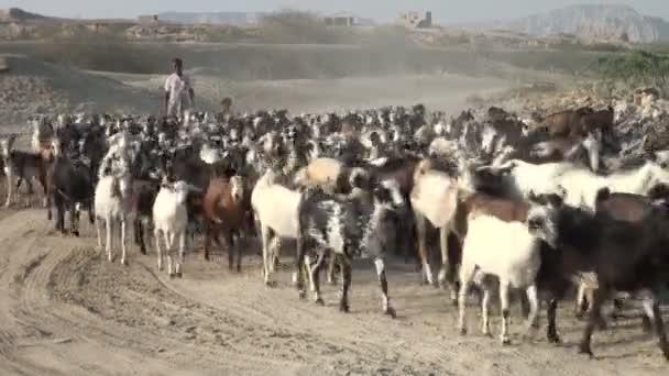 pastýř kráčí po kozách pouští