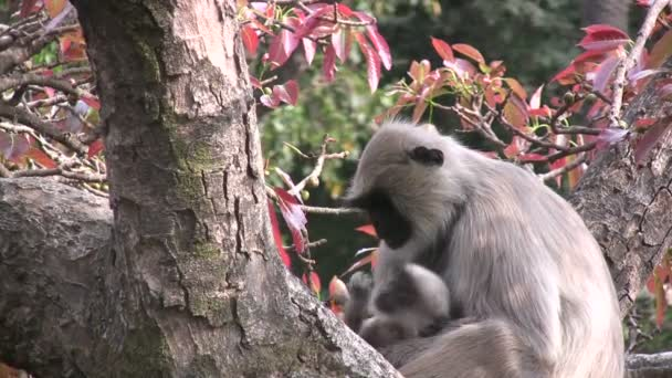 monkey and her baby sit in a tree