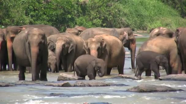 elefántok séta egy folyón