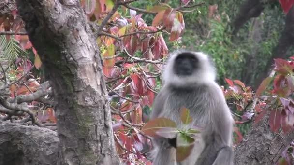 opice žere listí
