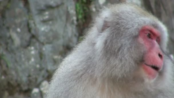 meleg tavaszi hó majom