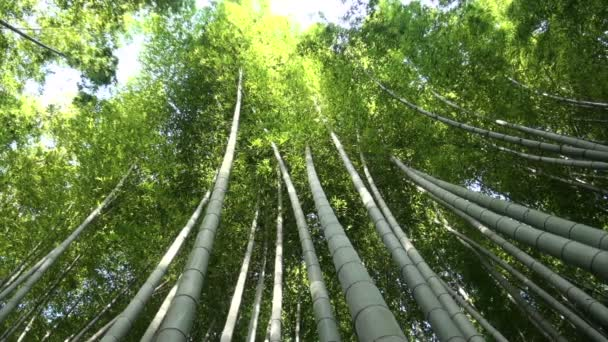 Bamboo trees in Kyoto.