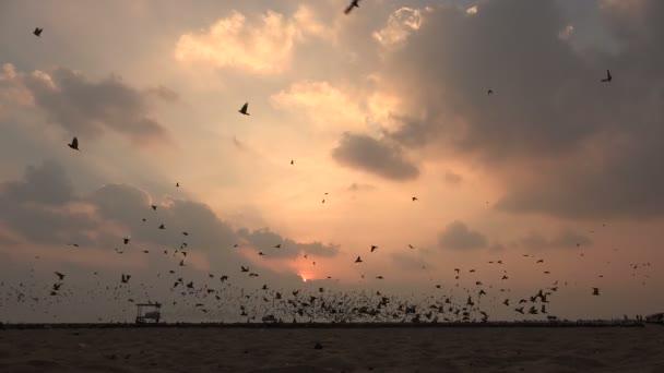 Huge flock of pigeons at sunrise