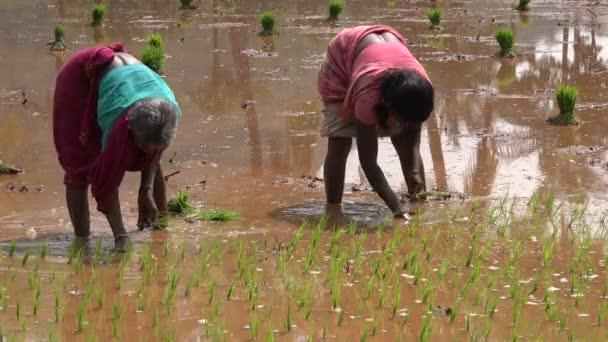 video v jižní Indii
