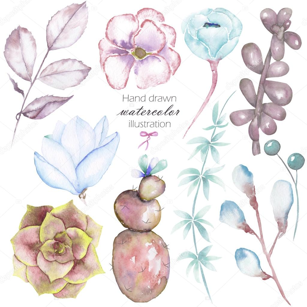 Set with the isolated watercolor floral elements: succulents, flowers, leaves and branches, hand drawn on a white background