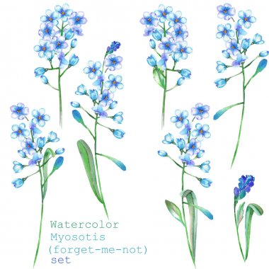 A set with the floral elements in the form of watercolor blue forget-me-not flowers (Myosotis) for a decoration