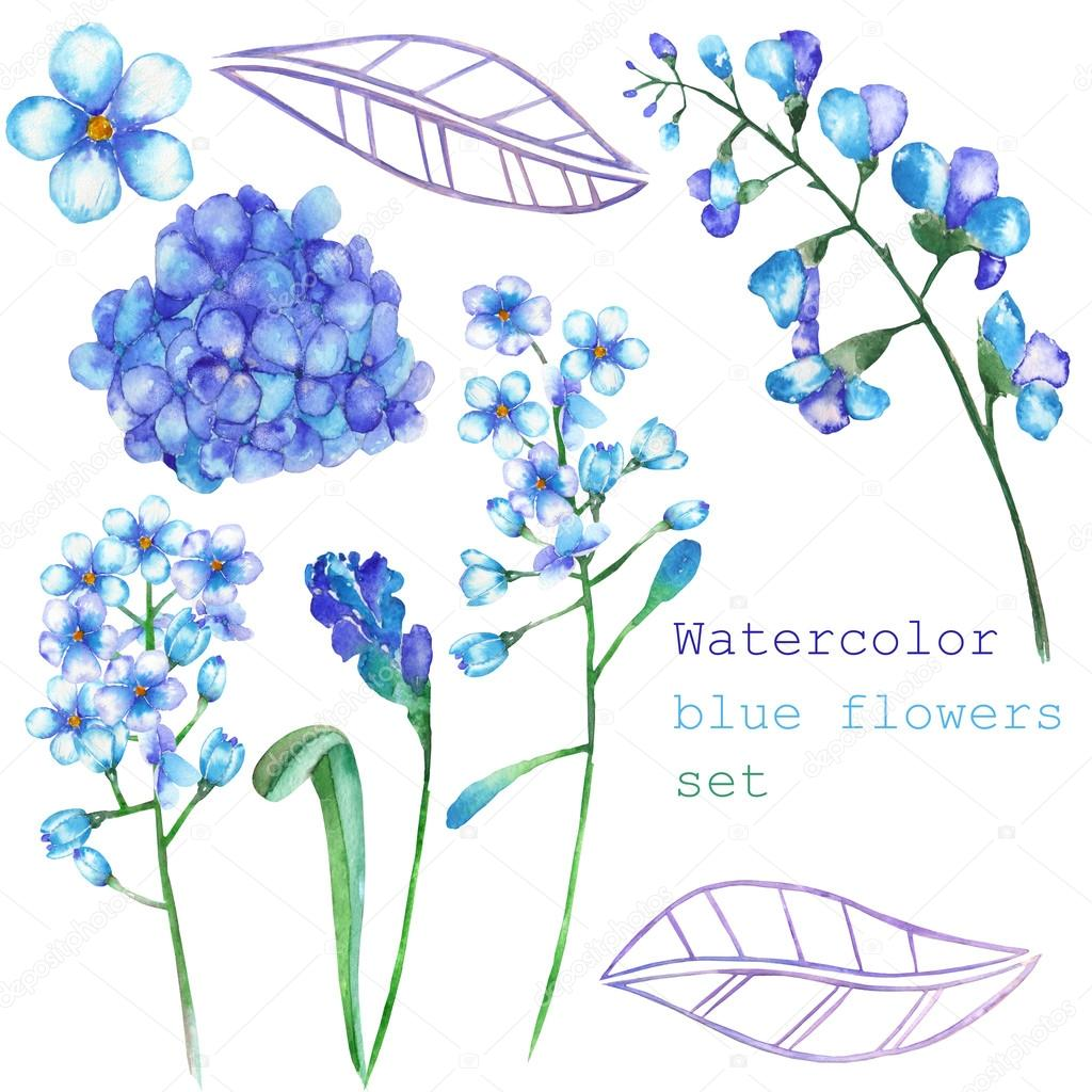 A set with the floral elements in the form of watercolor blue flowers, blooming flowers (Hydrangea, Myosotis) for a decoration