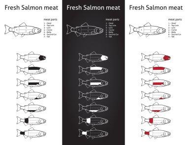 Fresk salmon meat diagram
