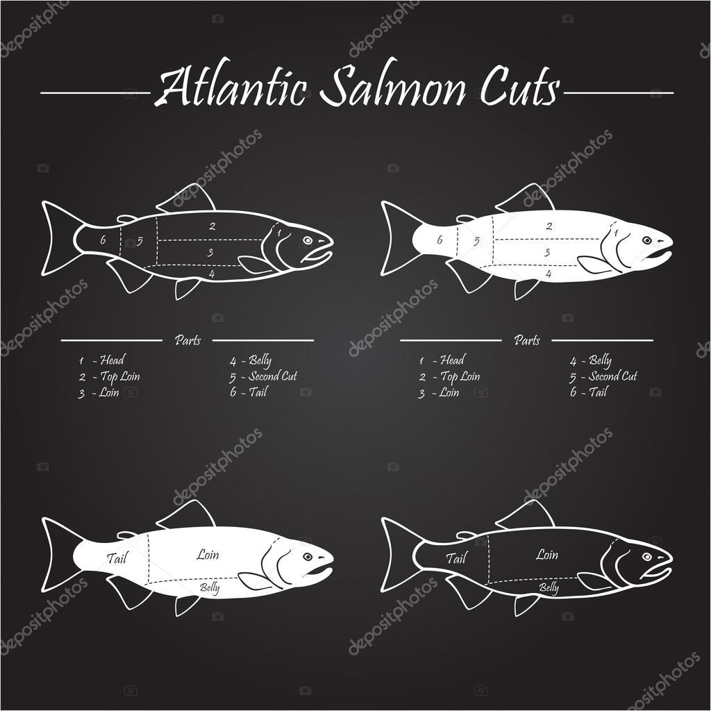 salmon diagram atlantic salmon cuts diagram — stock vector © dawesign ...