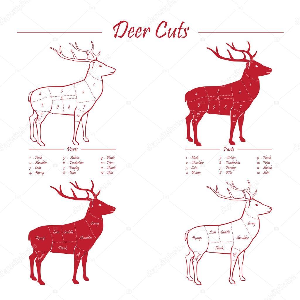 deer meat cut sheme elements red on white stock vector rh depositphotos com Butchering Deer deer butcher diagram chart