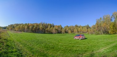 Panorama of birch copse on summer field