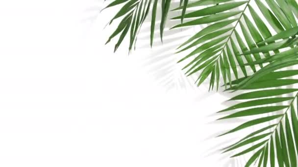 Motion of tropical palm leaves with shadows on white background