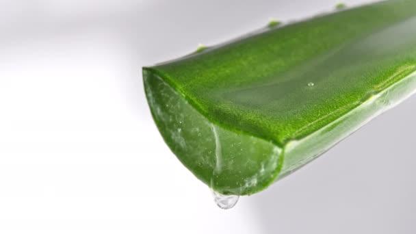 Pohyb kapky aloe vera tekutiny z listí na zeleném rozmazaném pozadí. Bylinný lék na péči o pleť a vlasy.