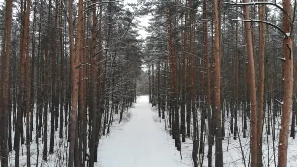 Schöne Winterwald Draufsicht. Drohnenvideo, Winterwald.