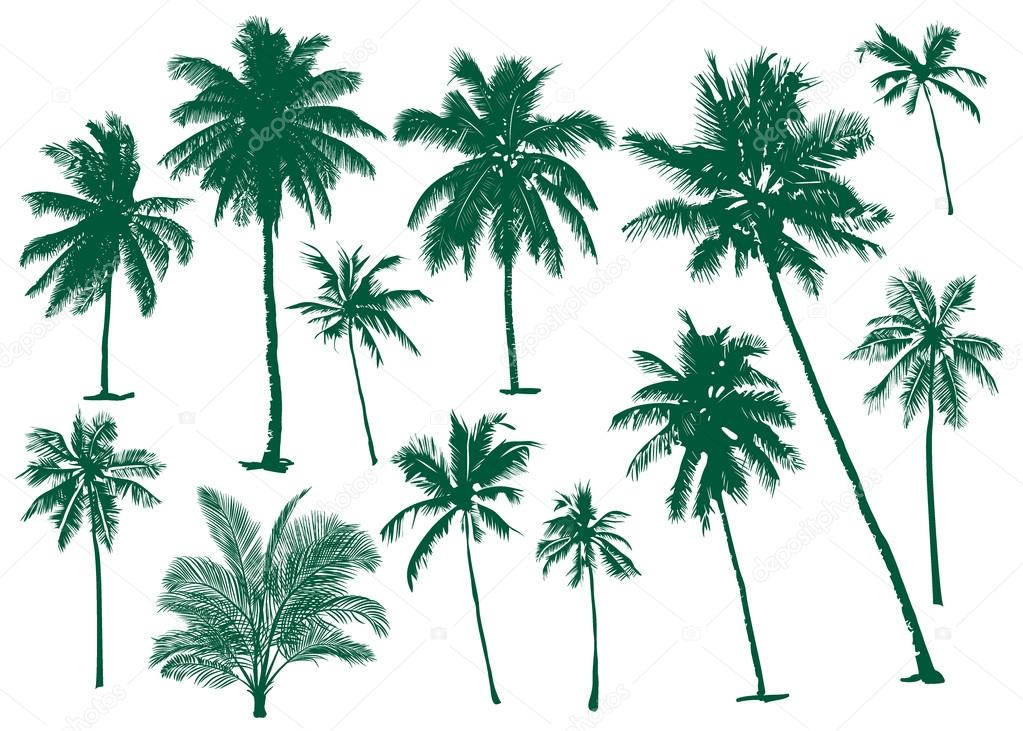 palmeras tropicales — Vector de stock © YulianaS #119889702