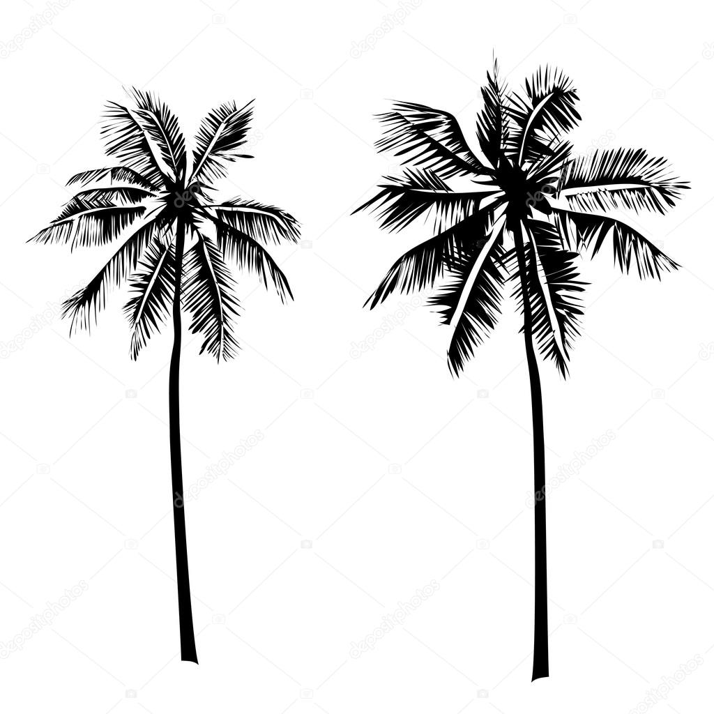 tropical palm trees 2