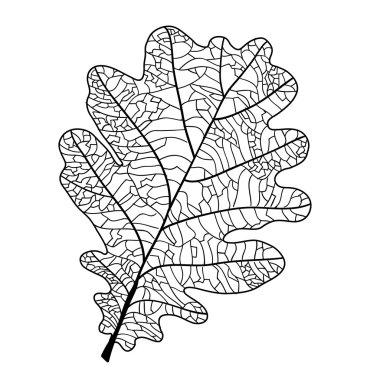 oak leaf with