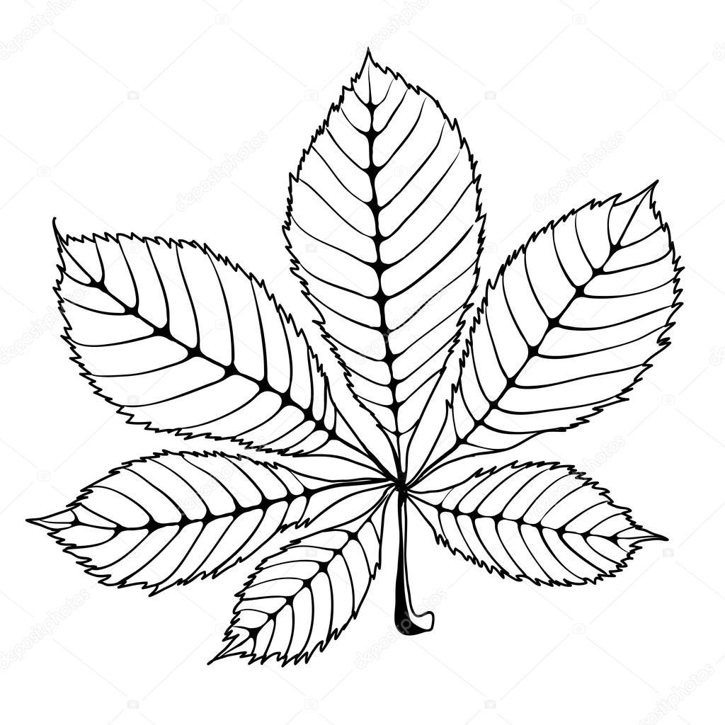 Каштановый листок Каштановый лист — Векторное изображение