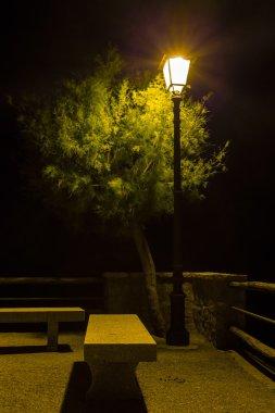 streetlight that illuminates tree and bench