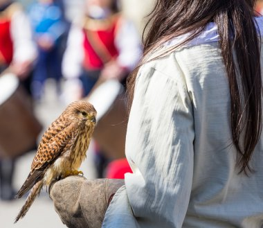 young falcon on the glove