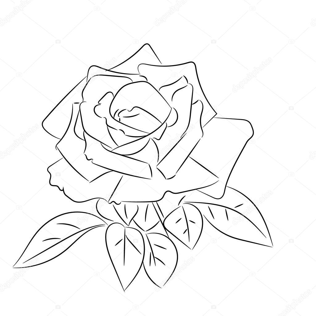 Dibujos De Rosas Blanco Y Negro Vector De Stock Elinorka 78505260