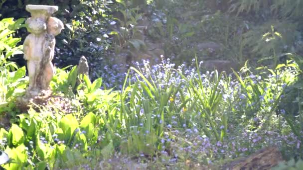 Tijd Voor Tuin : Last van glurende buren zo kun je zelfs naakt in je tuin