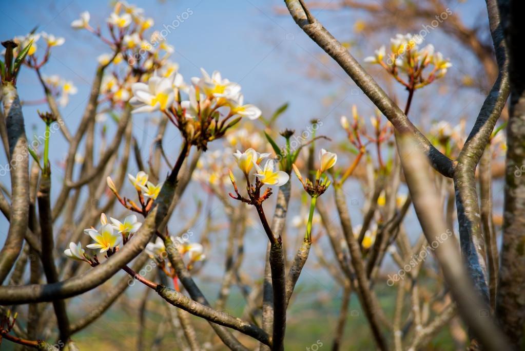 Weiße Blüten mit einem gelben Zentrum. Blüte — Stockfoto © A1804 ...